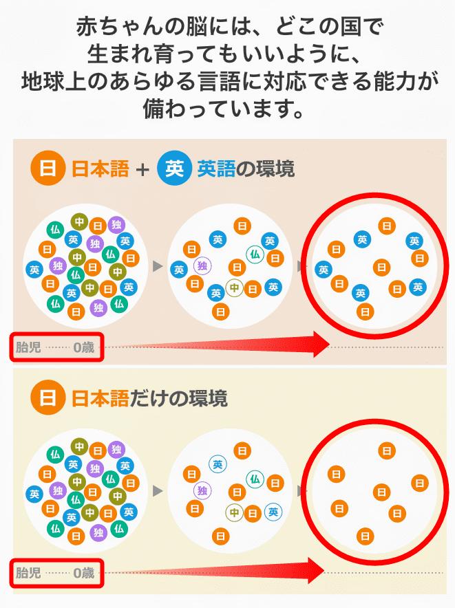 ディズニー英語システムのサンプル - 日本語と英語環境の違い